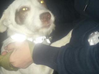 Ищем хозяина для двух неразлучных, стерилизованных собак Муси и Туси.