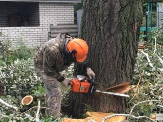 Распил дров.