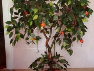 Продаются декоративные деревья
