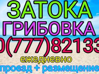 Грибовка, Затока, Ильичевск. Ежедневно