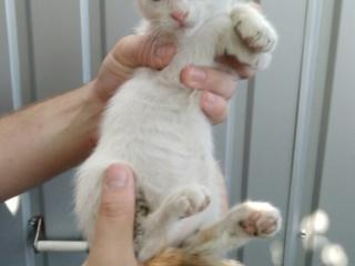 Котёнок в добрый руки