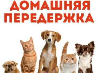 Присмотрю за животными (передержка животных)