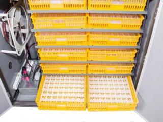 Инкубатор автоматический MS-1056/Incubator MS-1056 ouă automat/livrare