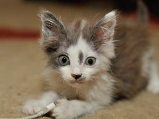 Кошка – лучший друг вашего дома