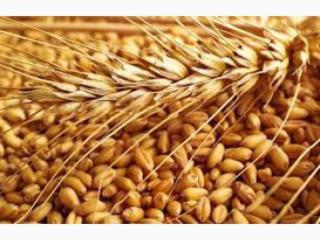 Продам пшеницу, возможно доставка!!!