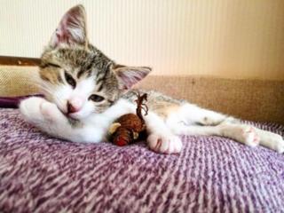 Бесплатно отдам в хорошие руки котенка 2,5 мес (девочка)