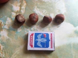 Продам саженцы фундука трапезунд. Сортность подтверждена.