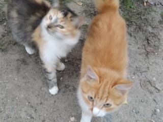 Подарю красивенных домашних котят!