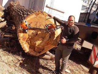 Taierea arborilor periculosi, curatarea de crengile uscate