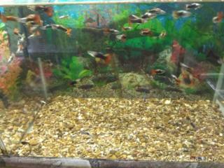 Аквариумные рыбки грунт и артемия
