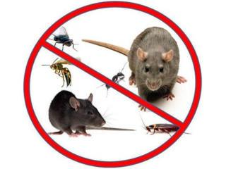 Servicii de dezinsectie, dezinfectie si deratizare