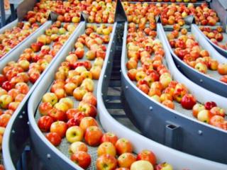 Sortare a mărului - Сортировка яблок