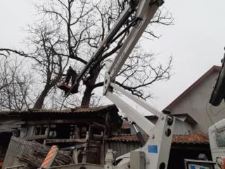 Taierea copacilor, curatarea copacilor, lucram in toata Moldova!