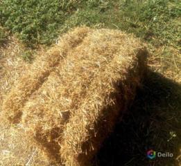 Продается солома ячменная и пшеничная.