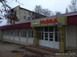 Кафе Флора в г. Дрокия