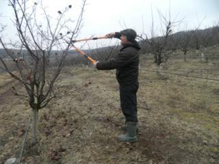 Сезонная обрезка плодово-ягодных деревьев