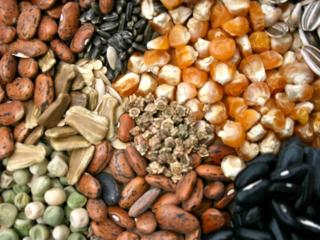 Семена овощных и лекарственных растений.