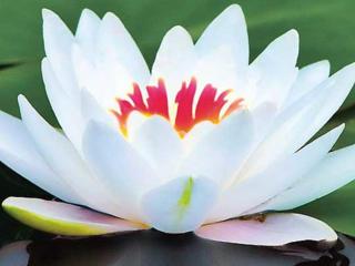 Профессиональный, расслабляющий массаж, Ботаника
