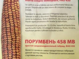 Семена кукурузы/seminte de porumb - хорошее качество и выгодные цены