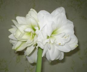 Укорененные молодые комнатные цветы.
