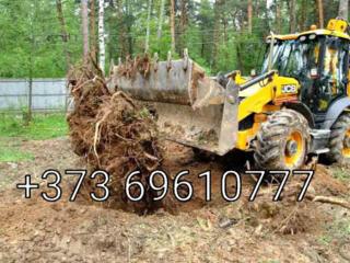 Servicii de defrisare livezilor curatarea terenurilor de arbori copaci