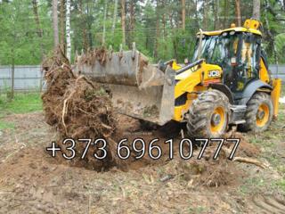 Servicii de defrisare livezilor si curatarea terenurilor de arbori vie