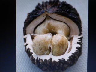 Американский Черный орех (Juglans nigra). Nuc NEGRU American.
