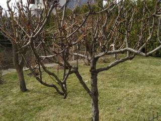 Опытный садовник - аккуратно, бережно, добросовестно - любые хозработы