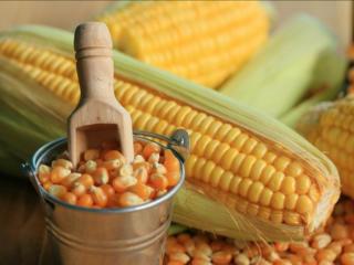 Продам семена тыквы и сахарная кукуруза семена