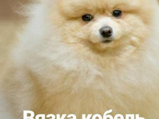 Вязка ШПИЦА, молодой, привезённый из Киева, с шикарного питомника