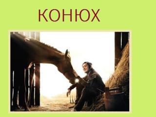 КОНЮХ в конно-спортивный клуб «Спарта» в с. Будешты в 10 км от Кишинева