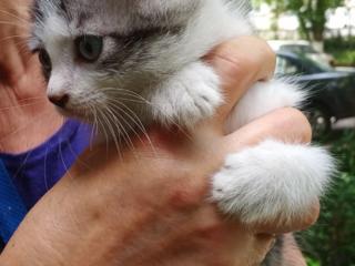 Малыш - сибирячок ищет доброго хозяина. Не пожалеете!