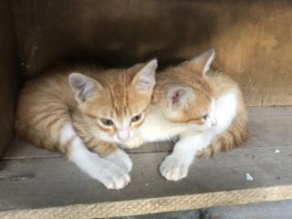 Прошу помочь пристроить игривых котят!!