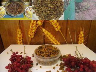 Перга (пчелиный хлеб)