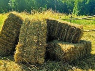 Продам сено луговое в тюках, цена 55 грн. Одесская область. Доставка
