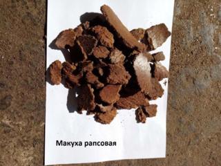 Продам рапсовый жмых (макуху) жаренный в любом количестве