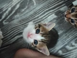 Подарим котят и привезём их вам ❤️