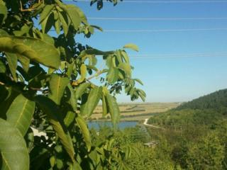 Дачный участок 6 соток Максимовка - Мерень
