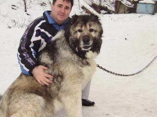 Корм для собак-12,50 л/кг КИШИНЕВ