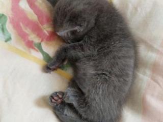 Отдам серого котика в добрые руки