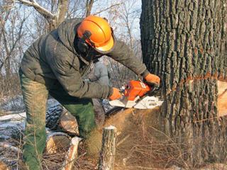 Спилим и вывезем ваши деревья (недорого)