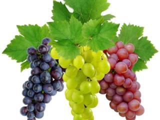 Куплю виноград на вино