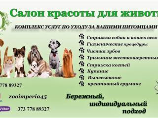 Стрижка собак и котов! Салон для животных!
