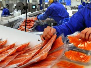 Angajăm muncitori la fabrică de pește în Polonia.
