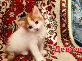 Рыже-белая девочка