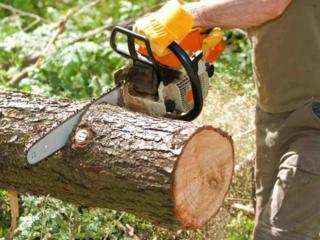 Спил, валка деревьев в сложных условиях. Очистка участков от растений