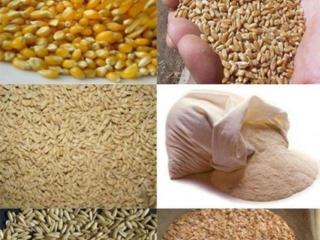 Куплю пшеницу, кукурузу, ячмень на реализацию