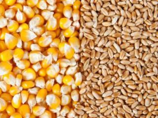 Корма зерно