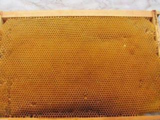 Куплю пчелиную сушь