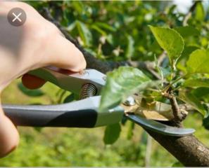 Качественная обрезка плодовых деревьев, кустарников, винограда